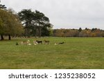 herd of deer in meadow in... | Shutterstock . vector #1235238052
