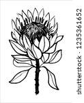 ink hand drawn protea flower... | Shutterstock .eps vector #1235361652