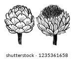 ink hand drawn artichokes... | Shutterstock .eps vector #1235361658