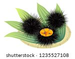 sea urchins on a bamboo basket  ... | Shutterstock .eps vector #1235527108