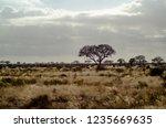 solitary tree landscape in...   Shutterstock . vector #1235669635