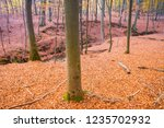 beech forest in autumn | Shutterstock . vector #1235702932