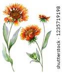 Beautiful Orange Coreopsis...