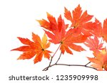 autumn maple leaves | Shutterstock . vector #1235909998