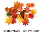 multicolor autumn leaves | Shutterstock . vector #1235910085