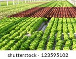 industrial hothouse with... | Shutterstock . vector #123595102