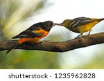Sharing   baltimore orioles
