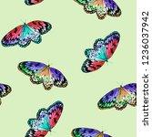 butterfly watercolor... | Shutterstock . vector #1236037942