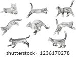 multiple cats in various poses... | Shutterstock .eps vector #1236170278