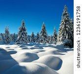 winter wonderland of fir trees...   Shutterstock . vector #1236191758