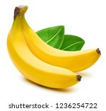 bunch of bananas isolated on... | Shutterstock . vector #1236254722