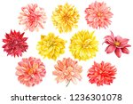 set of beautiful multicolored... | Shutterstock . vector #1236301078