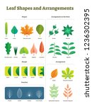 leaf shapes complex vector... | Shutterstock .eps vector #1236302395