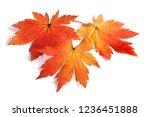 autumn maple leaves | Shutterstock . vector #1236451888