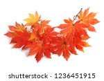 autumn maple leaves | Shutterstock . vector #1236451915