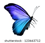 Stock photo blue butterfly isolated on white 123663712