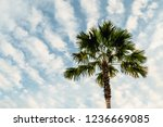 palm or coconut tree on cloud... | Shutterstock . vector #1236669085
