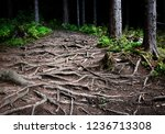 nature background intertwined...   Shutterstock . vector #1236713308