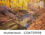 a stream in a beech forest in... | Shutterstock . vector #1236735958