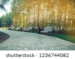 benches in the park. walking...   Shutterstock . vector #1236744082