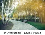 benches in the park.the sun's...   Shutterstock . vector #1236744085