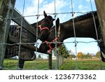 horses behind a fence | Shutterstock . vector #1236773362