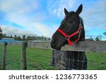 horses behind a fence | Shutterstock . vector #1236773365