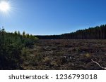 felling of trees in the forest... | Shutterstock . vector #1236793018