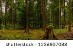 inside the lush black forest ...   Shutterstock . vector #1236807088