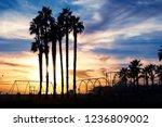 beautiful sunset through the...   Shutterstock . vector #1236809002