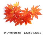 autumn maple leaves | Shutterstock . vector #1236942088