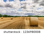 murphy's farm  essa  ontario