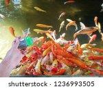 Feed The Koi Fish To Dissolve...