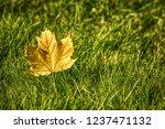 background of autumn maple leaf ... | Shutterstock . vector #1237471132