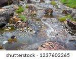 small waterway in the deep... | Shutterstock . vector #1237602265