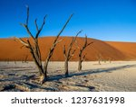 dead acacia trees and red dunes ... | Shutterstock . vector #1237631998