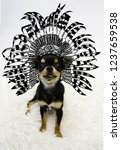 funny little dog in an ethnic... | Shutterstock . vector #1237659538