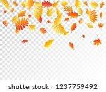 oak  maple  wild ash rowan... | Shutterstock .eps vector #1237759492