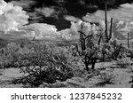 the sonora desert in central... | Shutterstock . vector #1237845232