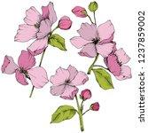 vector. appe blossom flowers.... | Shutterstock .eps vector #1237859002
