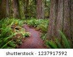 olympic peninsula rain forest... | Shutterstock . vector #1237917592