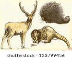 hand drawings   deer  coati ... | Shutterstock .eps vector #123799456