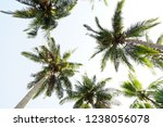 palm trees are isolated with... | Shutterstock . vector #1238056078