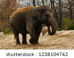 young asian red hair elephant...   Shutterstock . vector #1238104762