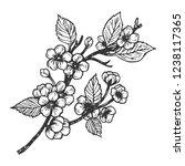 cherry blossom engraving vector ... | Shutterstock .eps vector #1238117365