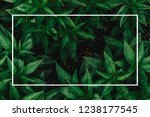 creative layout made of flowers ... | Shutterstock . vector #1238177545