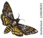 death's head hawk moth. hand... | Shutterstock .eps vector #1238248252
