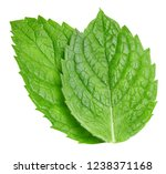 mint leaves isolated on white.... | Shutterstock . vector #1238371168