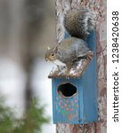 eastern gray squirrel  sciurus... | Shutterstock . vector #1238420638