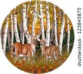 White Tail Deer   Birch Trees